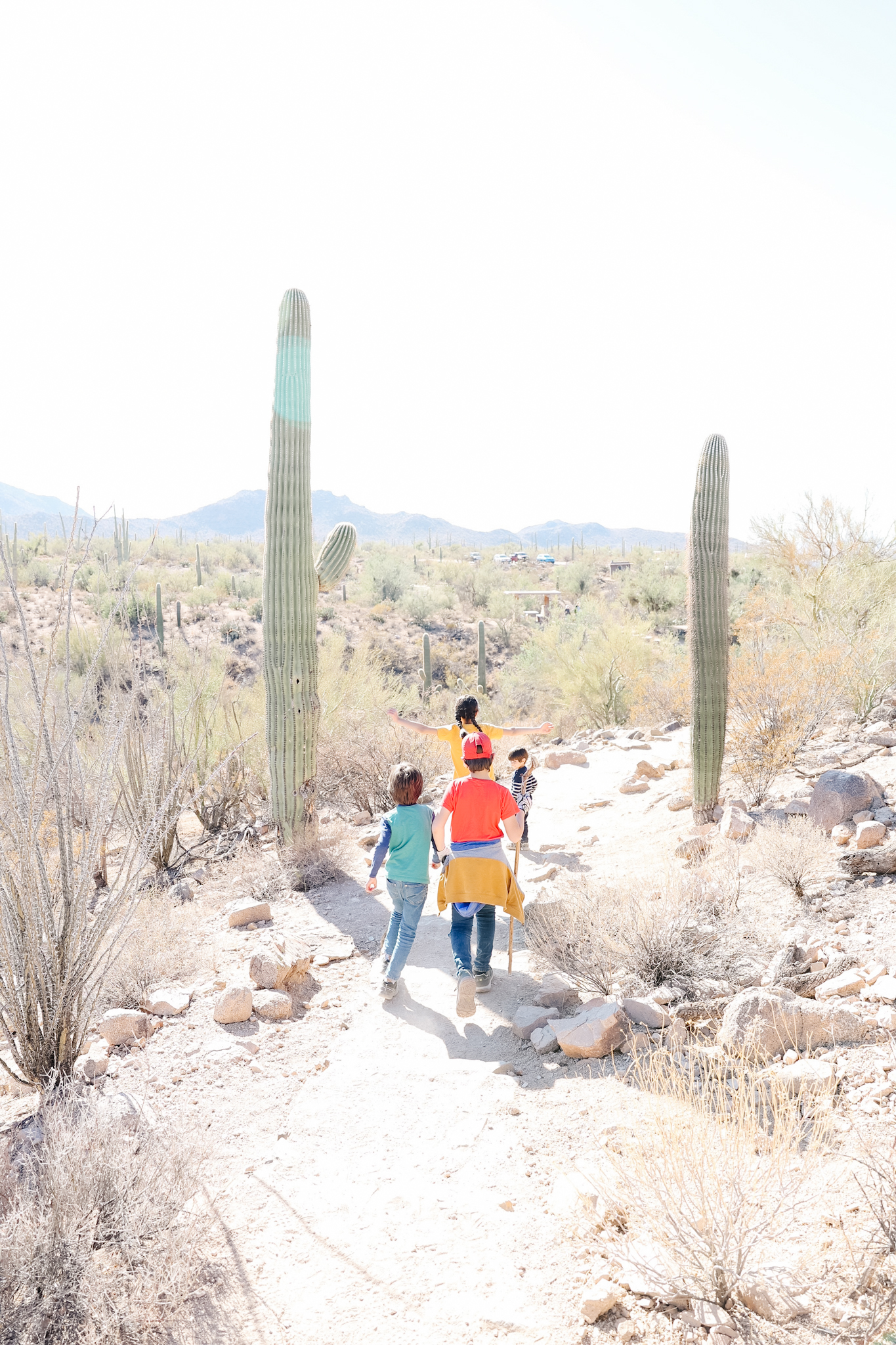 Hiking in saguaro national park with kids